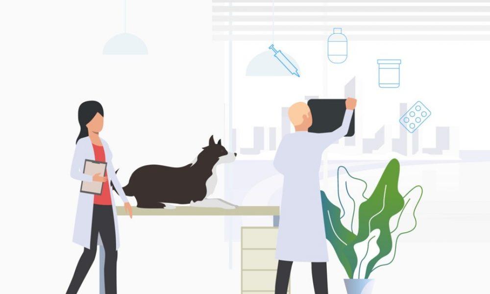 L'importance de prendre soin de la santé de votre chien