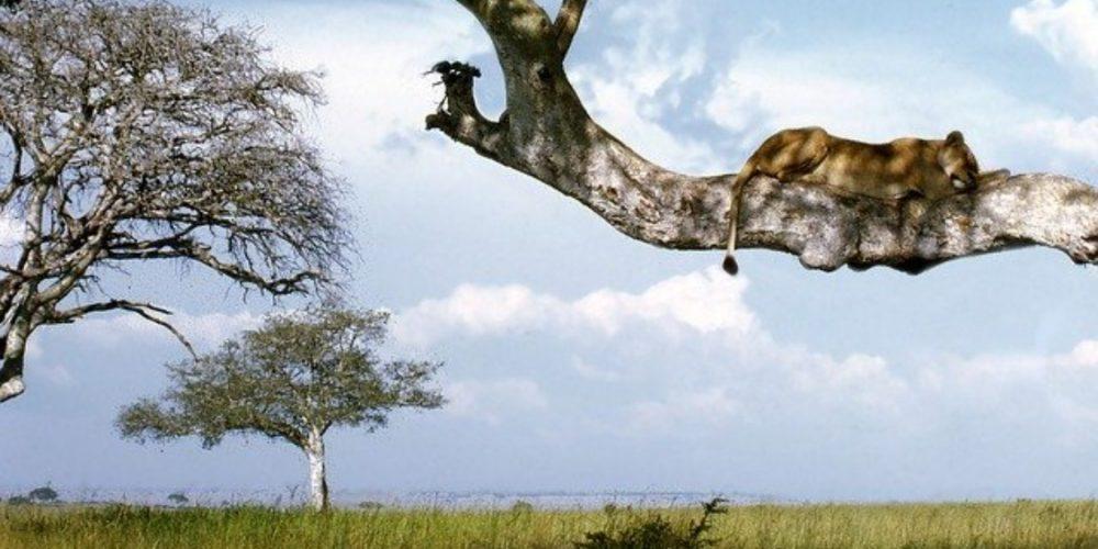 Les plus beaux parcs nationaux d'Ouganda