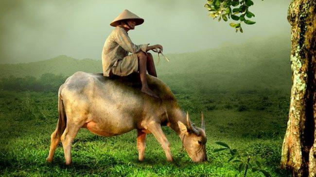 Vietnam – Un bref guide touristique
