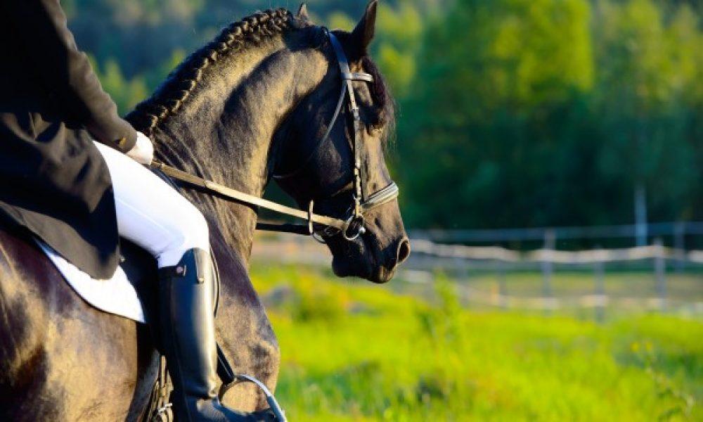 Les avantages inconnus de l'équitation