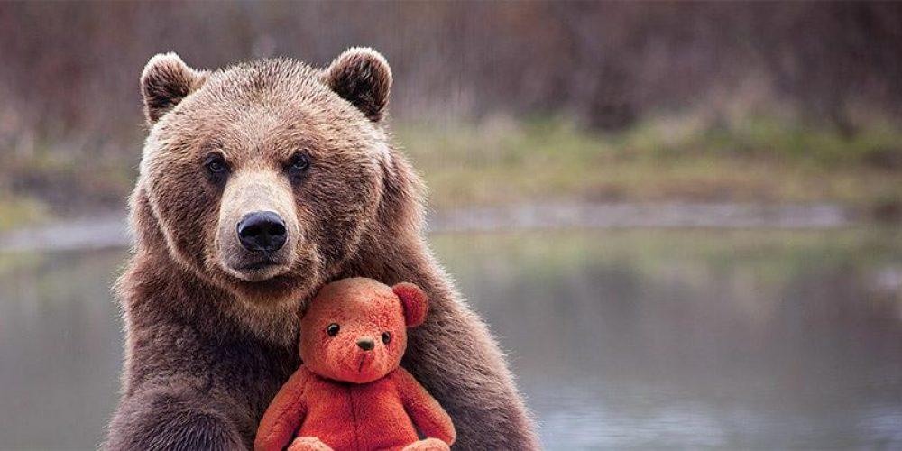 Ours en peluche – Une petite tranche d'histoire et de nombreux faits amusants
