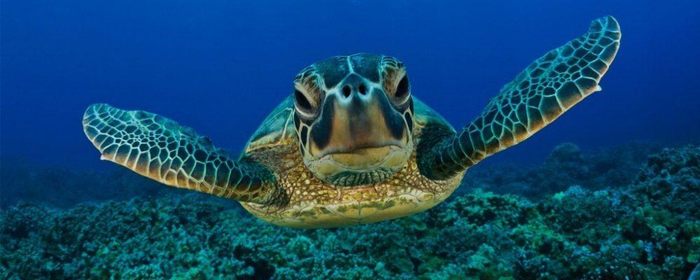 Pouvez-vous enseigner des tours à votre tortue?